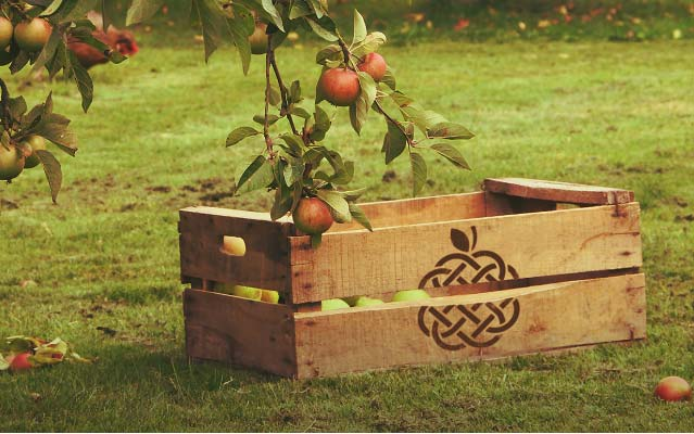 a crate of apples on the ground in an orchard